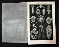 1902 Original Cromolitografia PESCI,CROSTACEI MARINI.Tipologia, Tav.2-3 Meyers.