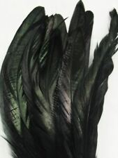 Black Coque Rooster Tail Feathers 6-8 inch per Ounce