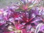 Charismatic Bromeliads
