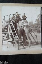 STA422 Elephant transport Zoo animaux STEREO albumen Photography Stereoview