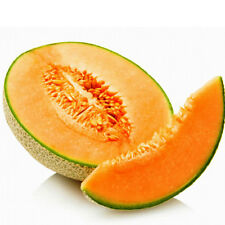 ROCKMELON Hales Jumbo Heirloom Seeds (V 131)