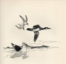 1937 BIRD PRINT ~ GREATER BLACK-BACKED GULL YOUNG CORMORANT & SANDWICH TERNS