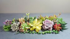 All Different Succulent Cuttings x 25 Succulents Echeveria/Sedum/Crassula
