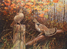 Ruffed Grouse 3 by Owen Gromme
