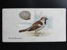 No.37 THE HOUSE SPARROW - Birds & Eggs by Lambert & Butler 1906