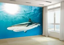 Caribbean Reef Shark Wallpaper Mural Photo 49705072 premium paper