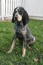 Beautiful Bluetick Coonhound Dog Journal : 150 Page Lined Notebook/Diary, Pap.