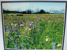 The Tetons & Wildflowers Matted Photo-Nature Photography-Landscape-Home Decor.