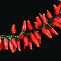 Lots 50/100/200X Charm Handmade Lampwork Hot Pepper Red Chili Glass Loose Beads