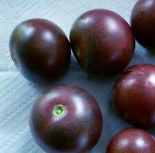 "TOMATE blaue Cherry-Cocktail-Tomate, würzig, süß ""BLAU"" wie BLAUBEERE, Blueberry"