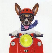 Pliante carte de luxe: Jack russel terrier Chico comme Easy rider avec vélomoteur