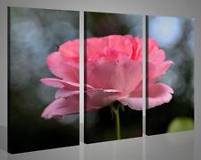 Quadri moderni Erectus Rose rosa fiori natura stampe su tela canvas 130 x 90