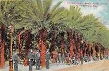 Algiers Africa American Fleet Visit Palm Trees Antique Postcard J50556