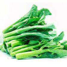 100+ Chinese Broccoli Kale Gailaan Gai Lan Kai Lan Phak khana 盖兰 中国花椰菜