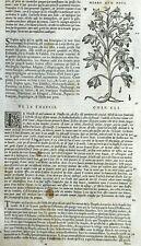 Herbe ambrosía Ambrosia Botánica Matthioli Mattioli Dioscorides Grabado