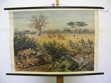 Belle ancienne la fresque Afrique animaux girafes zèbres Lion 85x62cm Vintage ~ 1950