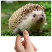 "Cute Hedgehog Garden Animal Small Photograph 6"" x 4"" Art Print Photo Gift #8205"