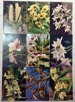 9 pcs Postcards set Vintage Postcard Orchids Flowers 80s Postcards Vietnam Hanoi
