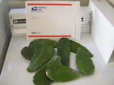 2+  Lbs of Spineless CACTUS PADS Opuntia Nopal Human or Reptile Food or To Plant