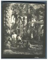 Algérie, Scène sous les palmiers  Vintage silver print.  Tirage argentique