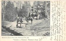 "Horses ""Taking A Hurdle"", Prospect Park, Brooklyn, New York City 1907 Postcard"