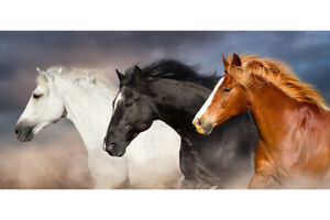 Horse In Line Portrait White Black Brown Animal Photo Art Print Poster 12x18