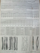 ANTIQUE PRINT C1880'S COTTON CHART OF STAPLE OF INDIAN GROWN COTTON ENGRAVING