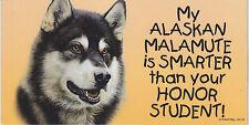 My Alaskan Malamute is Smarter than your Honor Student car/fridge Magnet 4X8