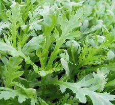 Salad - Chopsuey Greens - 5000 Seeds - Large