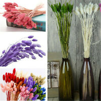 20Head/Bunch Bunny Tails Lagurus Ovatus Grass 6 Color Dried Flowers Home Decors
