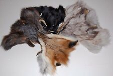 1 Silver / Black / Red Fox Face Taxidermy Coyote Beaver Rabbit Pelt Tanned Tails