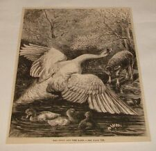 1882 magazine engraving ~ The Swan And The Lamb