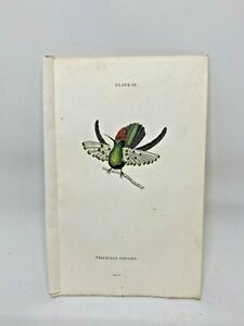 1st Ed Hand-colored Jardine's Natural History 1834 - Gould's Hummingbird - 12