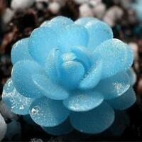60pcs New Attractive Decorative Succulents Seeds Plants Home Garden Office X@O