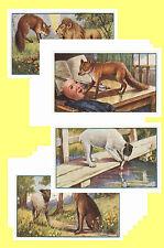 AESOPS FABLES (1931) - CIGARETTE CARD POSTCARD SET # 1