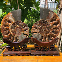 3.27LB A Pair Natural ammonite fossil conch Crystal specimen healing+stand H2