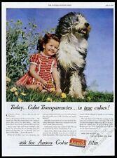 1945 Old English Sheepdog and girl photo Ansco camera film vintage print ad