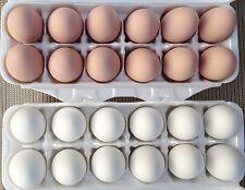 1 Doz Ceramic Fake Chicken Nesting Eggs White - Mexas Farms! Pro
