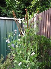 Climbing Plant Support Weathered Steel Garden Obelisk Iron 2.3m Tall Bare Metal
