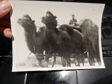camel dromedary   military photograph German Press WW2 Authentic