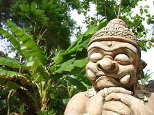 Bringt ein Stück Urlaub in den Garten: die exotische Bananenpalme !
