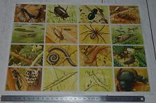 PLANCHE 33 X 24 IMAGES EDUCATIVES ECOLE ARNAUD 1958 N°110 INSECTES