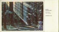 VINTAGE CHRISTMAS FOREST PINE TREES SUN BEAMS SNOW DEER JOHN 8:12 GREETING CARD