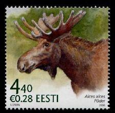 Elch. 1W. Estland 2006