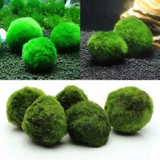 Mini Green Alga Ball Plant Moss Seaweed Live Aquarium Fish Tank Ornament 4-5cm