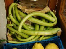 Kalabasse Serpente di Sicilia - Gourd 5+ Samen - Saatgut - Seeds - Gemüsesamen