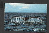 Colour Postcard Running Free Humpback Whale  Alaska unposted