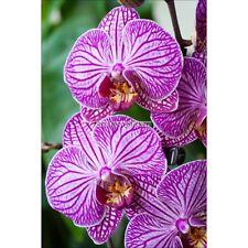 Magnete Da Frigorifero decocrazione Orchidea 60x90cm ref 6239 6239