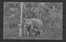 E7946 Ceylon Postcard elephant at work  wild animals cultures ethnics