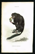 1834 Monkey Prints Lot for jh9669 (Lot of 8 Hand-Colored Engravings)